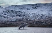 Vannøy Sport Wale