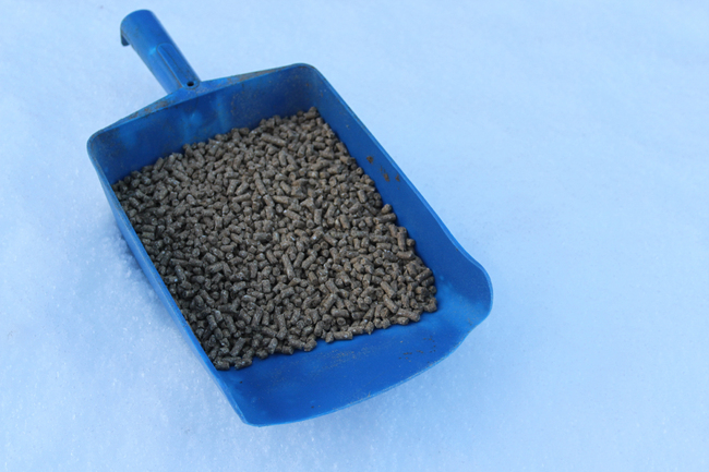 Bilde 4 - Kraftfor pellets - Foto Svein Morten Eilertsen_cropped_650x433.jpg