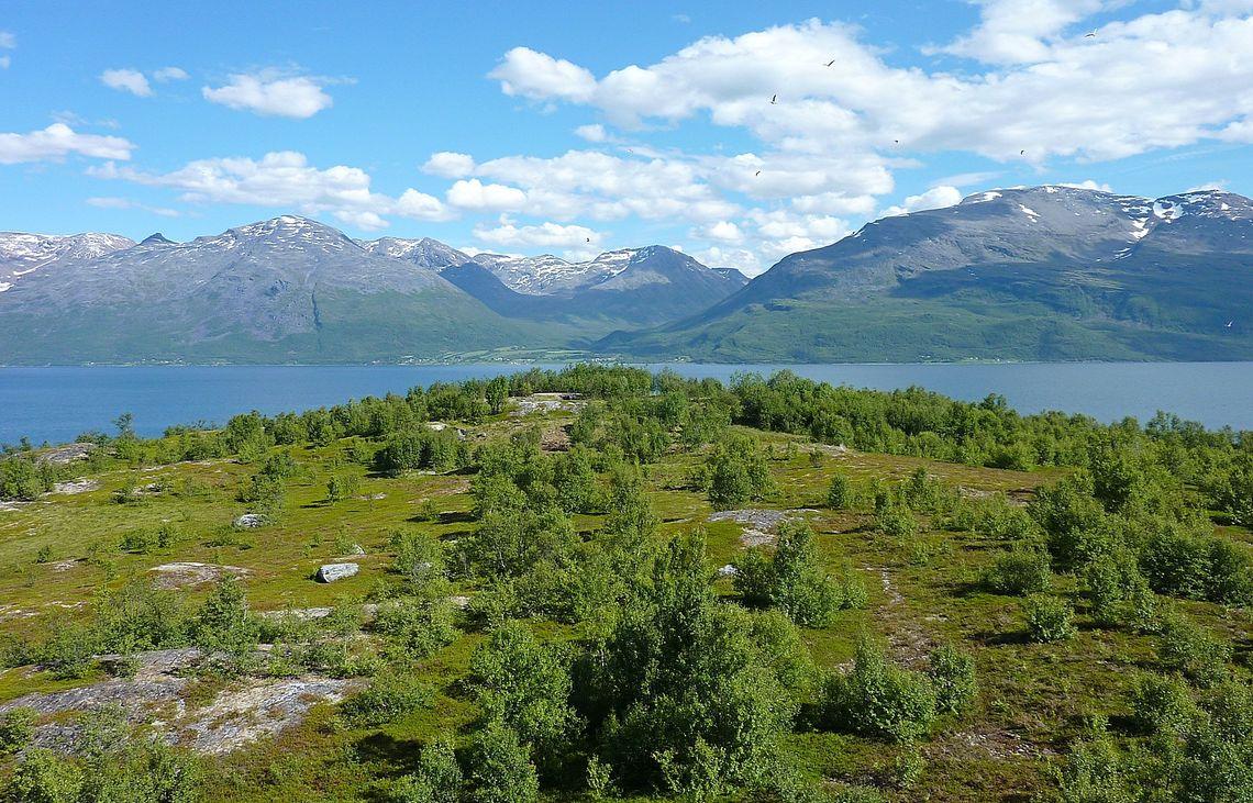 Utsikt fra Ørnhaugen på Årøya. Foto: Ishavskysten friluftsråd.
