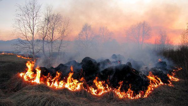 Brann i åker