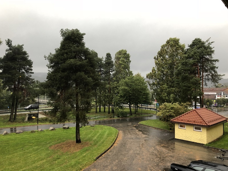 Bilde av trær i vind