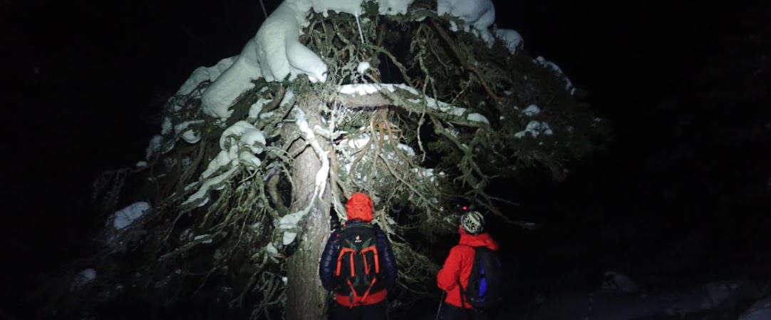 Skinedfart i Saurdal sin urskog, foto JH