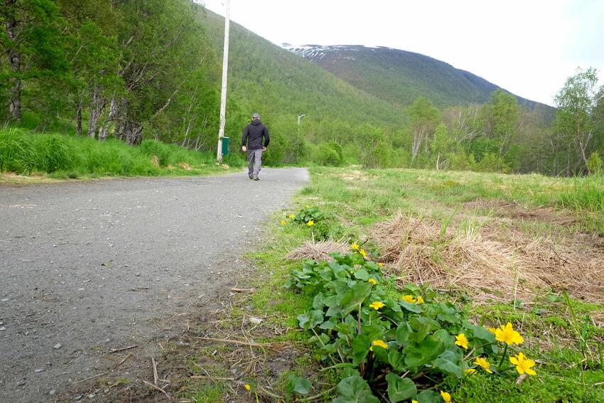 Elvekrysset, Tromsdalen og grønn turveg. Foto: Maja Sjöskog Kvalvik