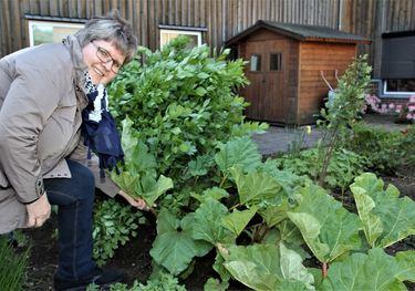 Linda Rustad  sjekker rabarbraen i hagen.