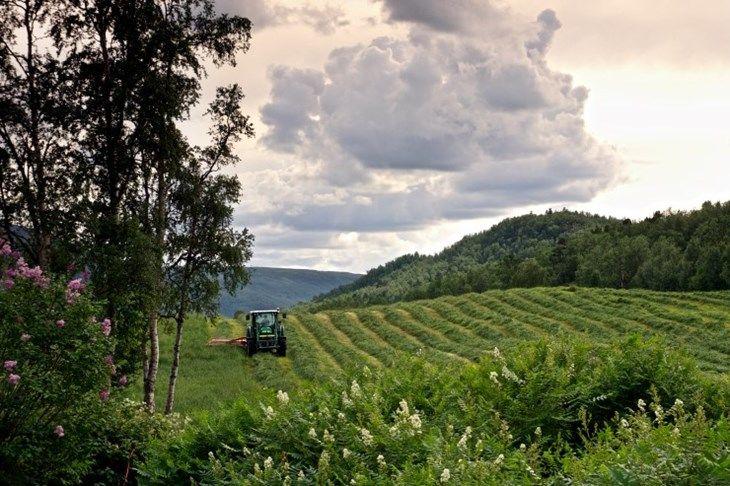 grasslatt-landbruk-gress-jorde-traktor_foto-arne-johanson-