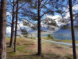 Utsikt fra bålplassen i furuskogen, ut mot nesset. Foto: Maja Sjöskog Kvalvik.