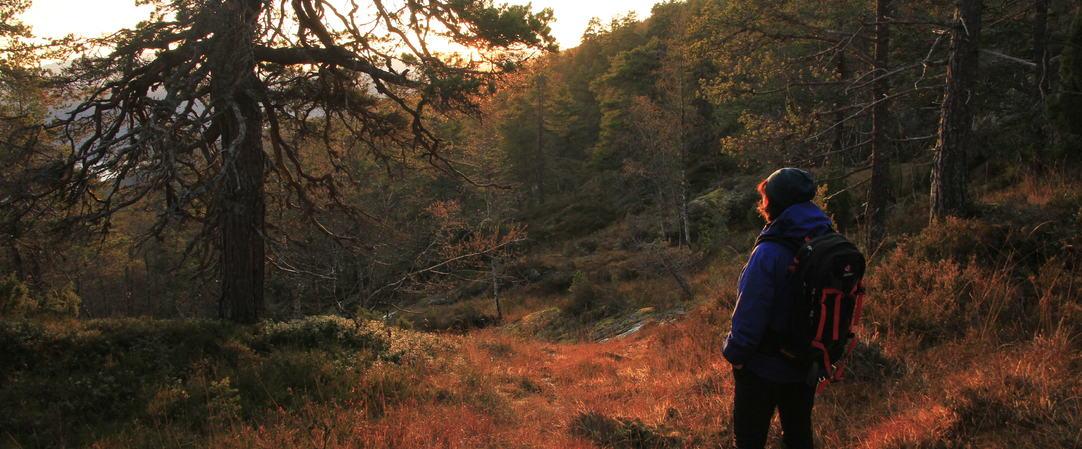 Solnedgang i urskogen, foto JH