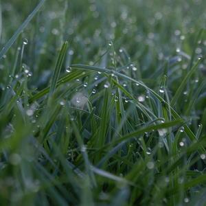 Bilde gress