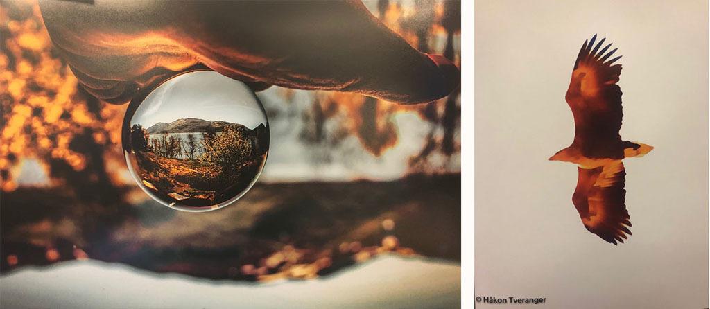02 Foto frå utstillinga, FUGL og KULE x2.jpg