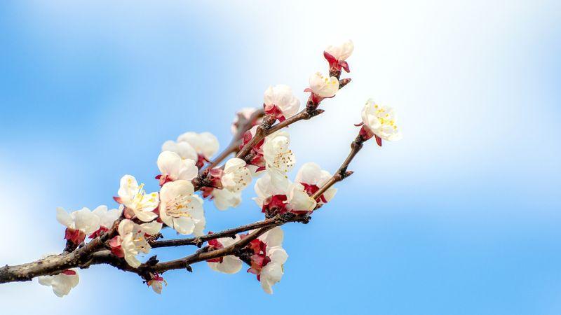 blomst,vår