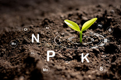 Planter treng Fosfor, kalium, nitrogen