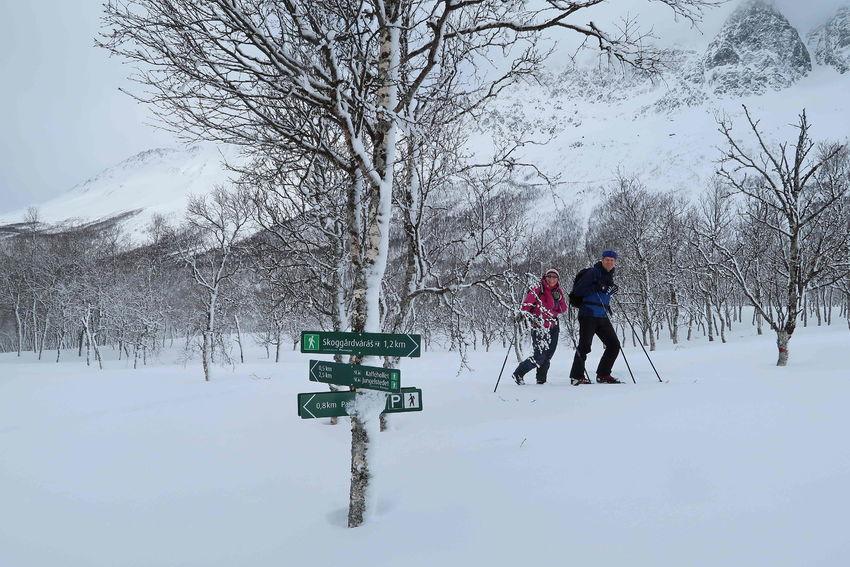 SkiturtilSkoggårdsvarras_TineMarieVHagelin