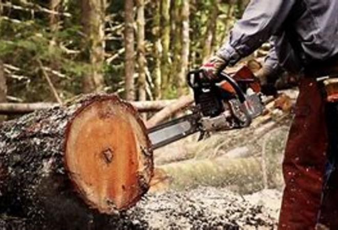 Situasjonsbilde hogst i skog