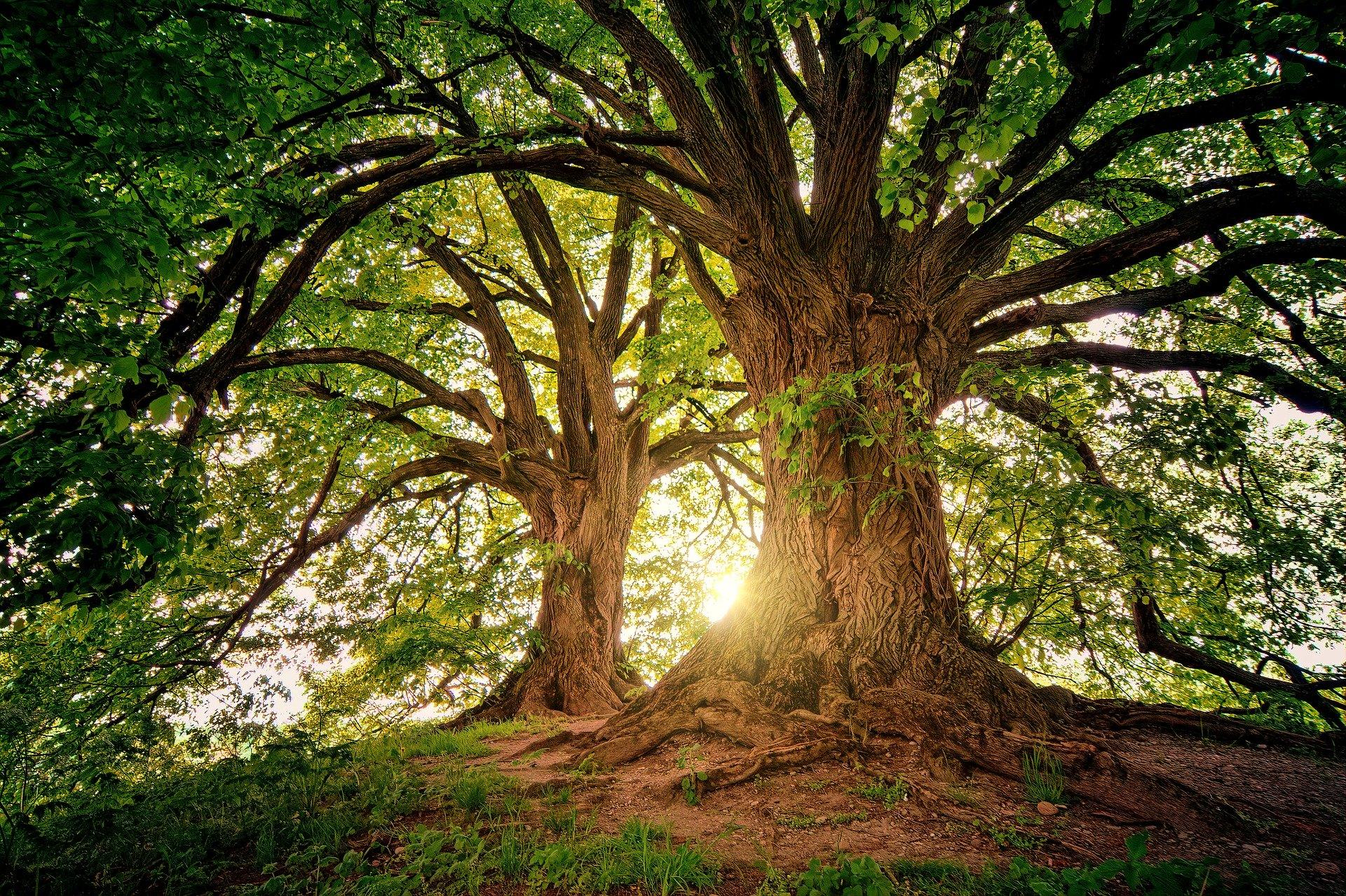 tree  3822149  1920