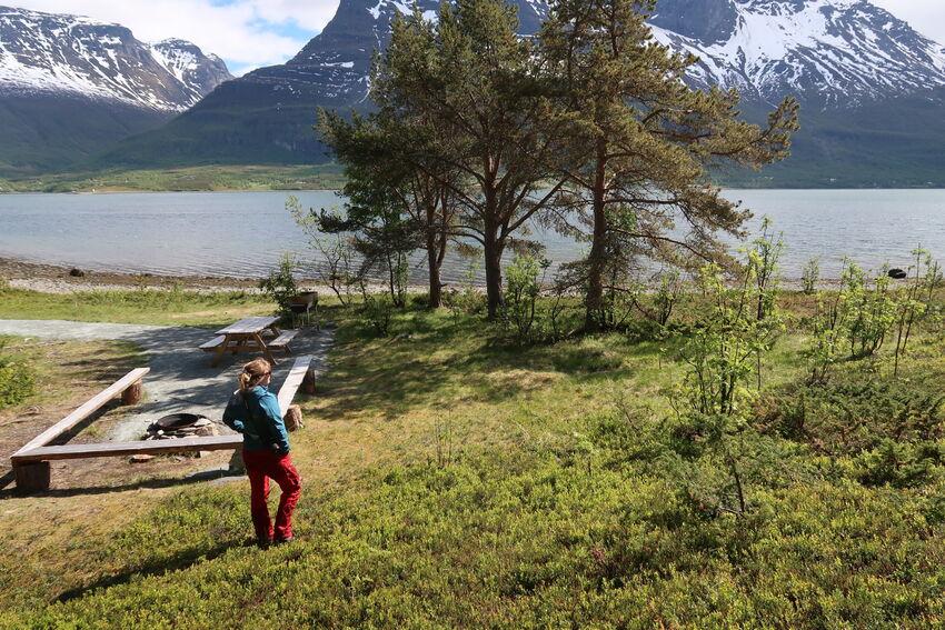 Under furutrærne ved den innerste bålplassen ligger det et automatisk fredet samisk kulturminne. Om du ser nøye etter, ser du omrisset av der det en gang i tiden sto en gamme. Foto: Toril Skoglund