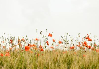 Blomster i eng