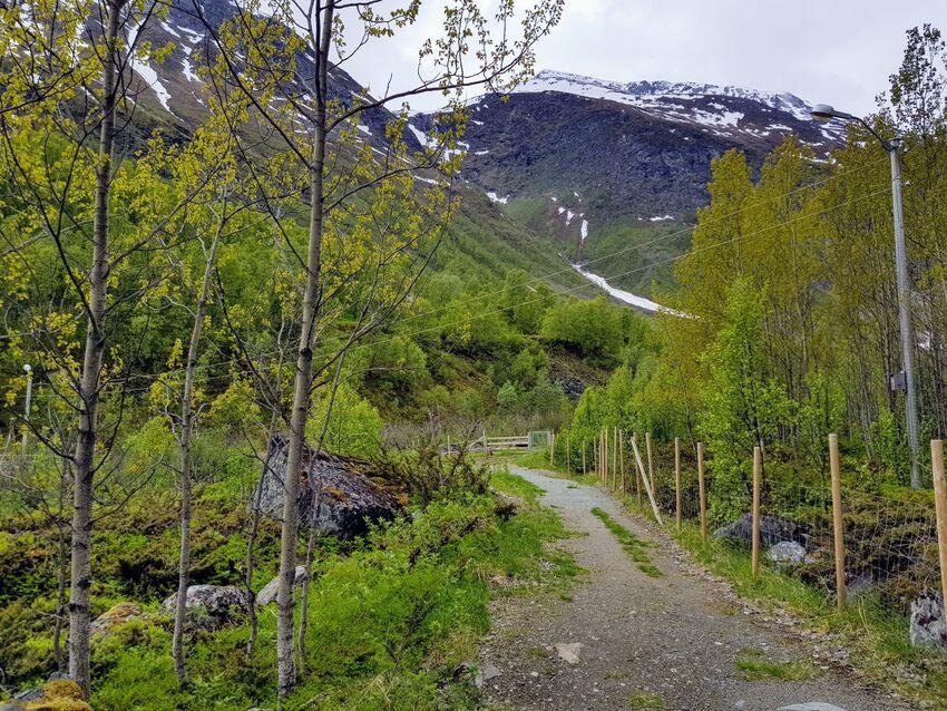 Furuflaten skogsveg. Foto: Maja Sjöskog Kvalvik