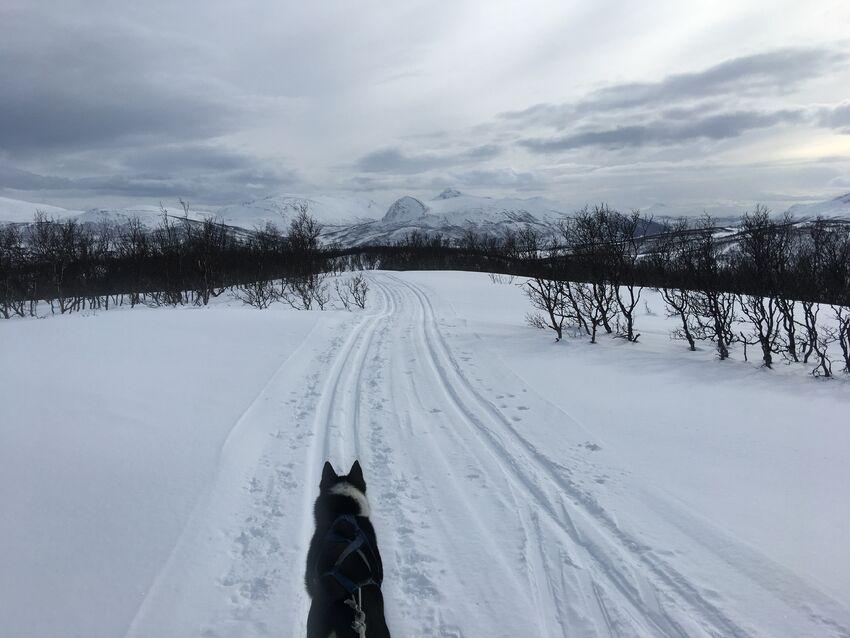 Ta gjerne med en venn på tur! Skisporstatus kan du sjekke på skisporet.no. Foto: Tine Marie Valbjørn Hagelin