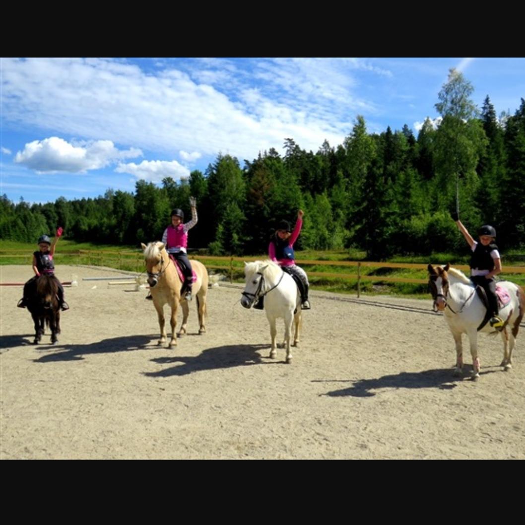 Hesteaktivitet.jpg