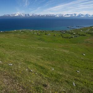 Naturbeitemark på Nordeidet. Foto: Geir Arnesen, Sállir Natur.